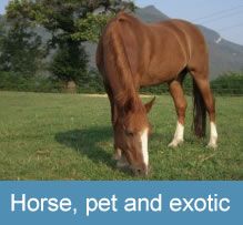 Horse, pet and exotic